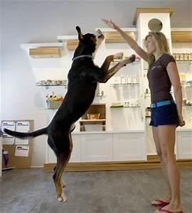 Hotel Pour Chien : h tel de luxe pour chien rien de trop beau pour nos ~ Nature-et-papiers.com Idées de Décoration
