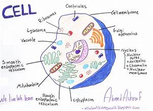 Biology Club  Our Cells  1