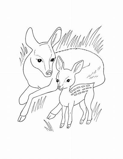 Wild Animal Coloring Pages Animals Printable Getcoloringpages