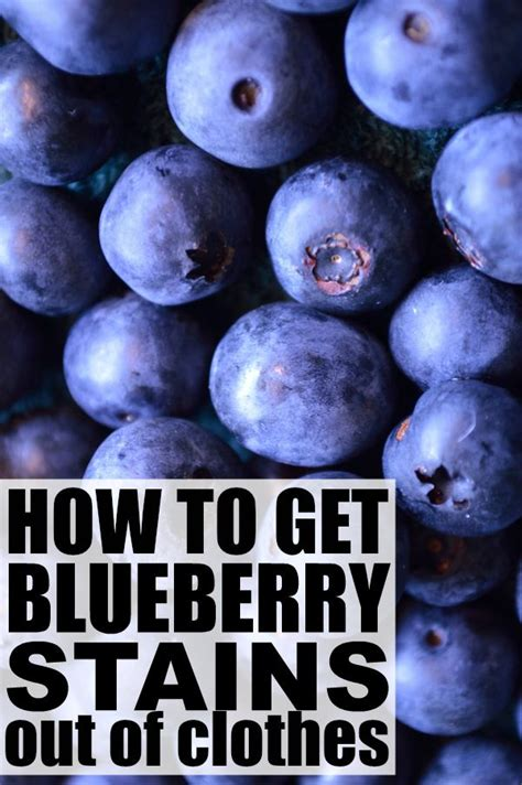 How To Get Wine Out Of A by How To Get Blueberry Jam Stains Out Of Clothes