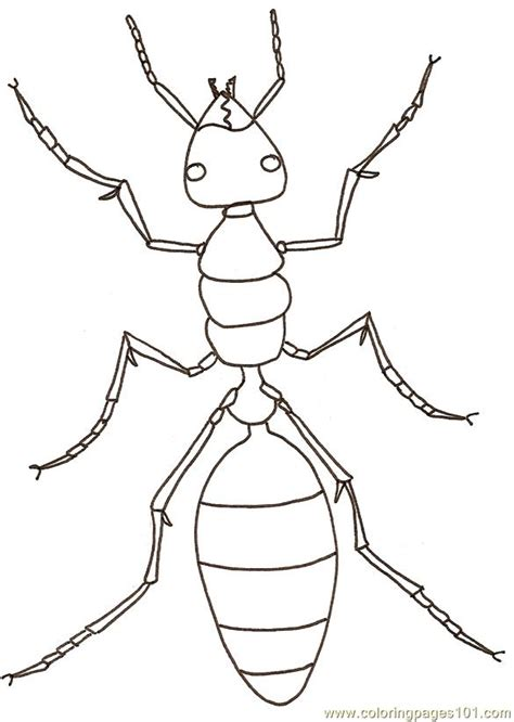 ants coloring page  ants coloring pages