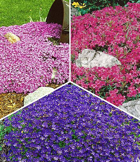 Pflanzen Garten Dinslaken by Bodendeckende Polsterstauden Kollek Polsterstauden Bei