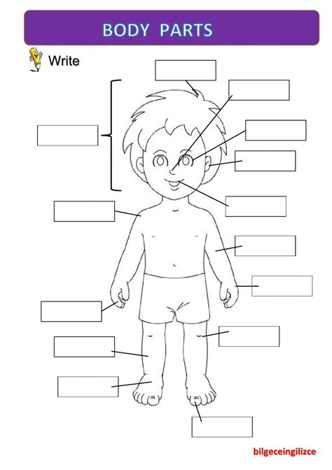 body partswith video interactive worksheet