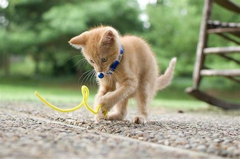 adopt  kitten