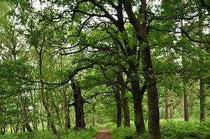 Foret De Sherwood : la for t de sherwood nottingham ~ Voncanada.com Idées de Décoration