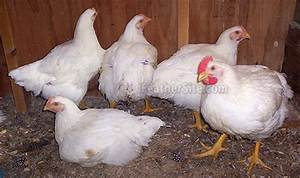 broiler - definition - What is