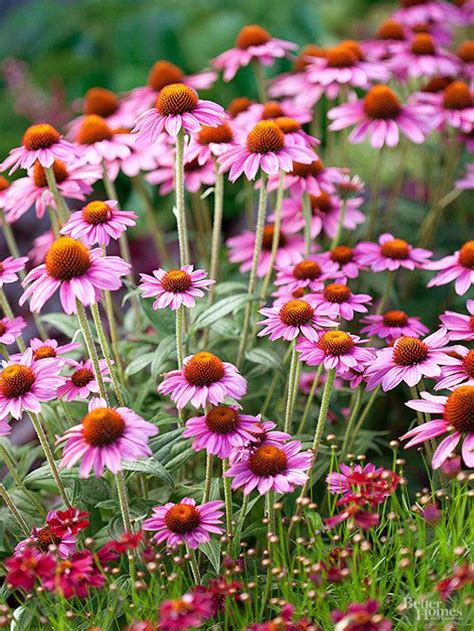 97 best images about perennials on gardens