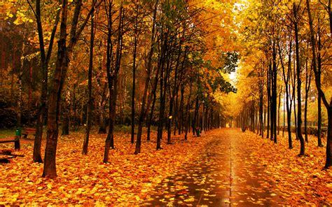 Autumn Tree Wallpaper Wallpapersafari