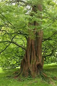 Bäume Für Kübel : 262 besten b ume str ucher bilder auf pinterest ~ Michelbontemps.com Haus und Dekorationen