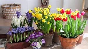 Planter Des Bulbes : les bulbes fleurs ~ Dallasstarsshop.com Idées de Décoration
