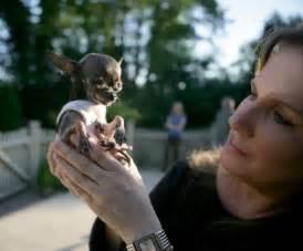 World Smallest Dog Ever