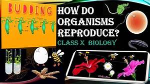 Notesrajkumar Biology: A Guide For 11th & 12th Cbse Students