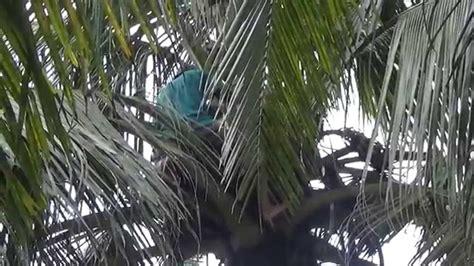 md gambar pantai pohon kelapa