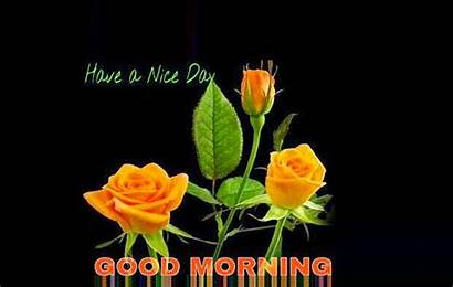 Yellow Rose Morning Quotes Friends Mojly Wishgoodmorning