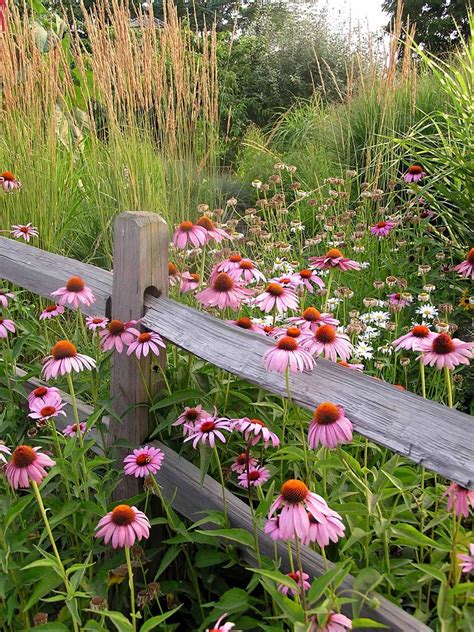 wildflower garden plans plant wildflowers in your garden and keep them tidy and organized with these tips hgtv