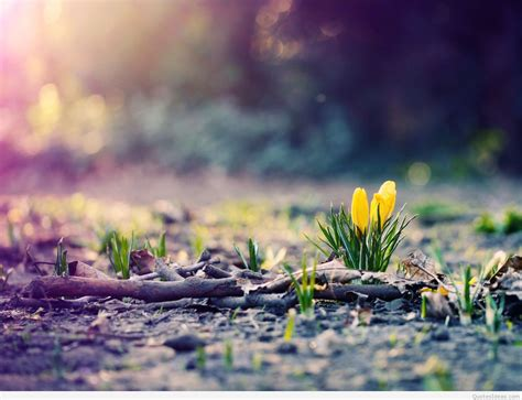 March Hd Picture by Hd March April Wallpapers