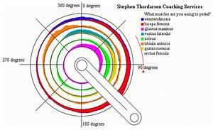 Which Muscles Are Really Used During The Pedal Stroke  By