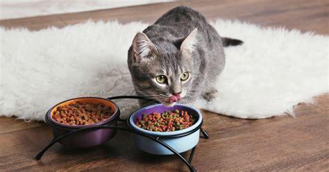 ce quaime manger le chat alimentation du chat wamiz