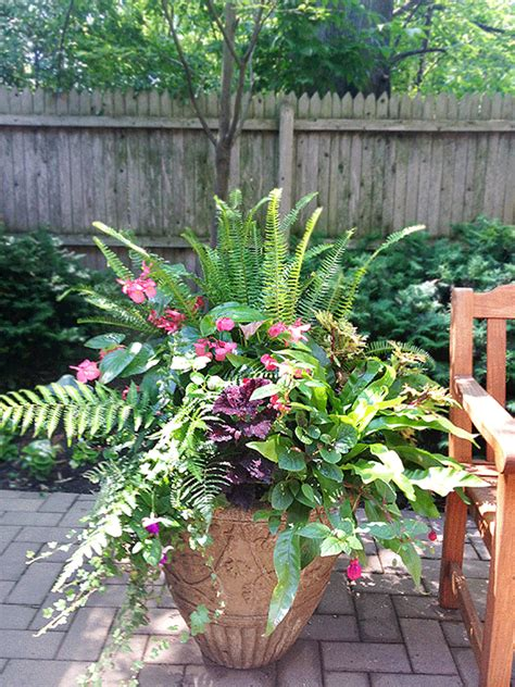potted plants for shaded areas shade annuals for containers if i had my choice shade versus sun i d always choose shade i