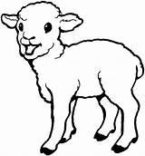 Sheep Lamb Coloring Pages Born Drawing Laughing Colouring Sheet Printable Bighorn Getcolorings Everfreecoloring Coloringsky Getdrawings sketch template