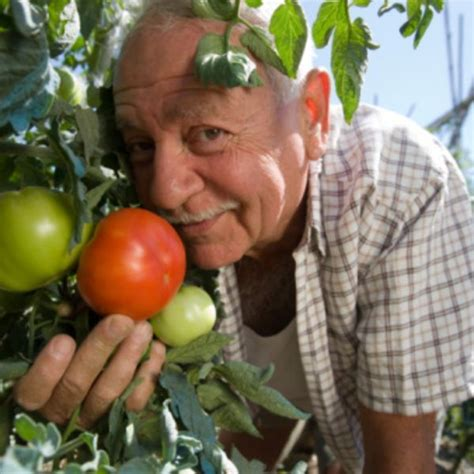 tomatoes solanine tomato planting companion ehow asparagus plant after plants growing