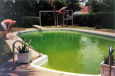 Swimming Pool Algae