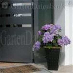 Hortensie Als Zimmerpflanze : hortensie blau f rben pflege schneiden vermehren ~ Lizthompson.info Haus und Dekorationen