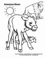 Bison Coloring Sheets Template Animal Animals Popular Coloringhome sketch template