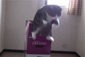 Cat GIF - Find & Share on GIPHY