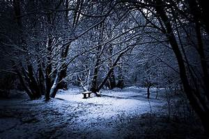 Winter Wonderland Photography: Fantastic Examples & Tips