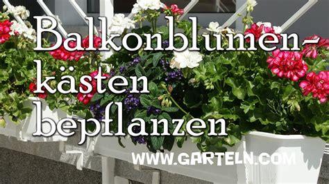 Blumenkübel Bepflanzen Vorschläge by Balkonblumenk 228 Sten Pflanzen