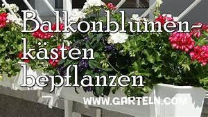 Künstliche Blumen Für Balkonkästen : balkonblumenk sten pflanzen youtube ~ A.2002-acura-tl-radio.info Haus und Dekorationen