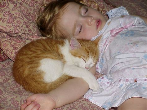 Cats And Babies  Land Of Cats