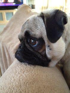 sad animals images cutest animals fluffy