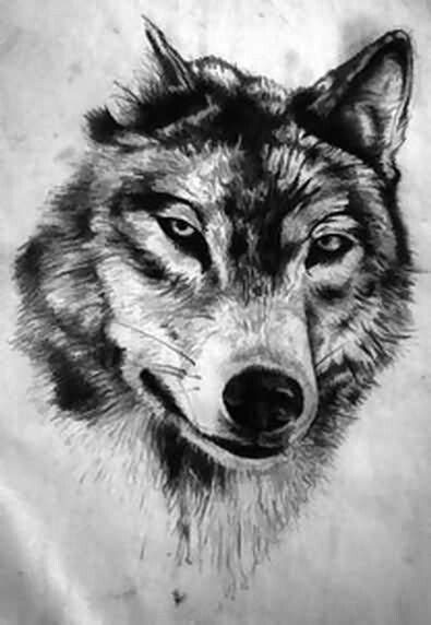 Tattoo Wolf draw | Tinta | Pinterest | Tatoo, Wolf