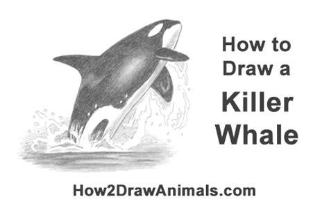draw  killer whale breaching video step  step