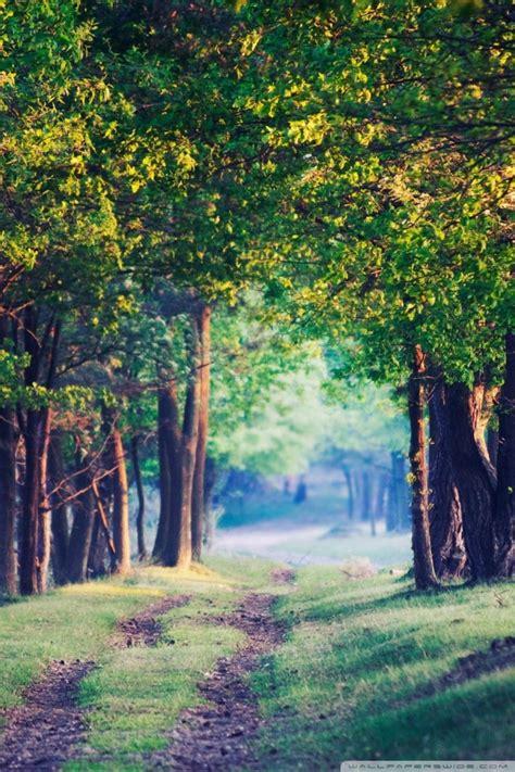 beautiful forest path summer  hd desktop wallpaper