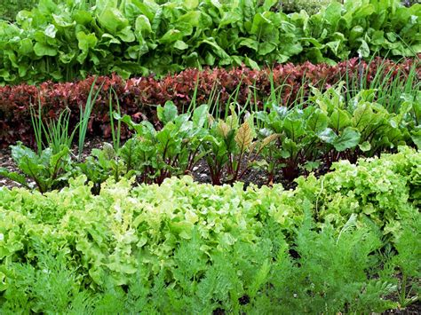 planting a garden preparing soil and yard for planting a vegetable garden hgtv