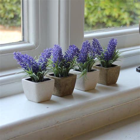 planter lavande en pot set of 4 lavender pots melody maison 174
