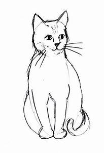 Pencil Sketch Of Lovers Cat Line Drawing Cute Cats Simple Cat Drawing Cat