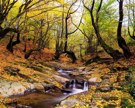 wonderful autumn landscape forest trees stream fallen