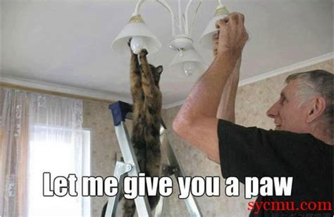 Cats Can Screw in Light Bulbs