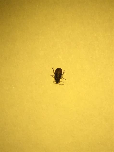 kleine zwarte beestjes in badkamer zwarte insecten in huis