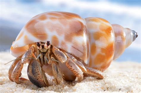Do Hermit Crabs Shed Their Shells by Suumo And Tokyo Create Artificial Hermit Crab