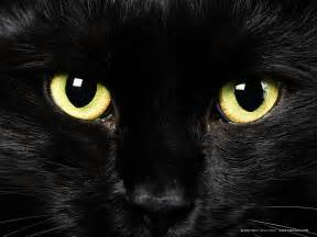 4 black cat cats lover black cats myths and beliefs