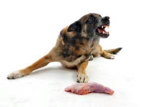 combat dog food aggression