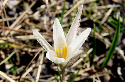 Steppe Spring Flowers Short Plants Colourful Lives
