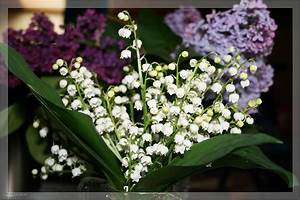 Pflanzen Im Mai : blumen die man im mai pflanzen kann blumen dekoration ideen ~ Buech-reservation.com Haus und Dekorationen