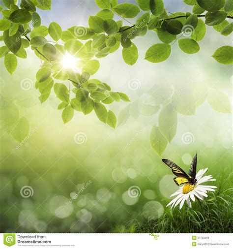 butterfly fresh spring bokeh background stock images