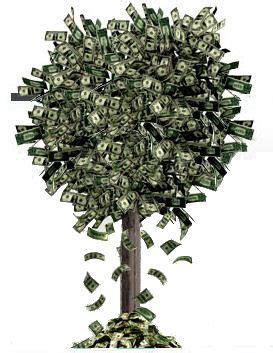 Images Of Money Tree Something Beautiful The Money Tree